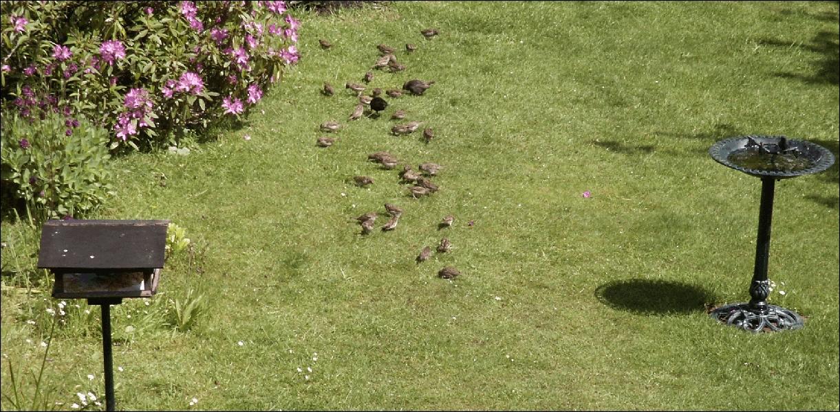Garden Birds Feeding and Nestbox designs